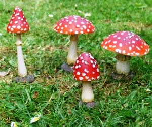 IDEE REGALO ORIGINALI SET 4 FUNGHI ORNAMENTALI